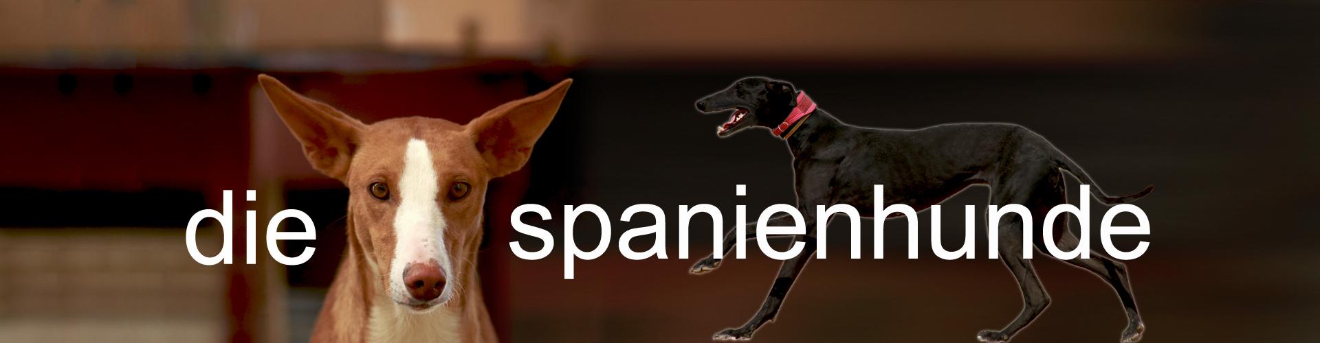 die spanienhunde